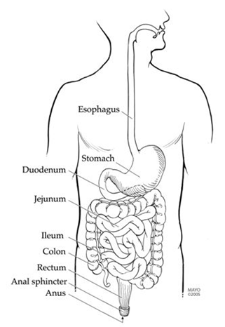 Gastroparesis - American College of Gastroenterology
